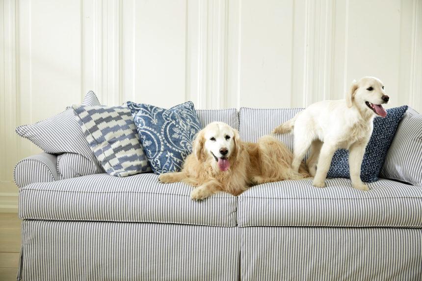 20-2252 MARINA SOFA  CASSIE, DOG RORY, DOG